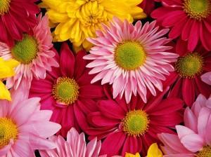 Всичко за цветята! Flowers1-300x224